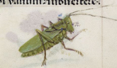 Detail of a grasshopper, from the Breviary of Queen Isabella of Castile, Netherlands (Bruges), c. 1497, Additional MS 18851, f. 30r