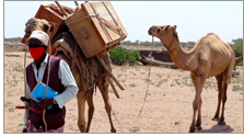 Save the Children's traveling camel library in Ethiopia